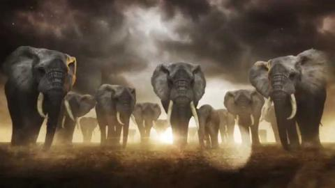 Take A Stand for Elephants PSA - Mandarin 为大象,表明你的立场 | WCS China