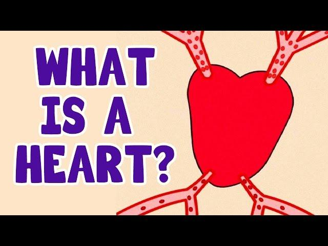 What Is A Heart?