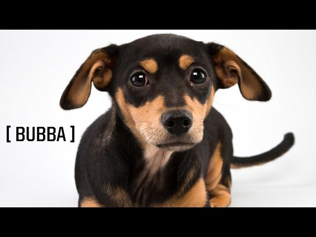 Puppy Player Profiles: Bubba