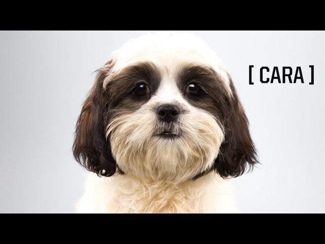 Puppy Player Profiles: Cara