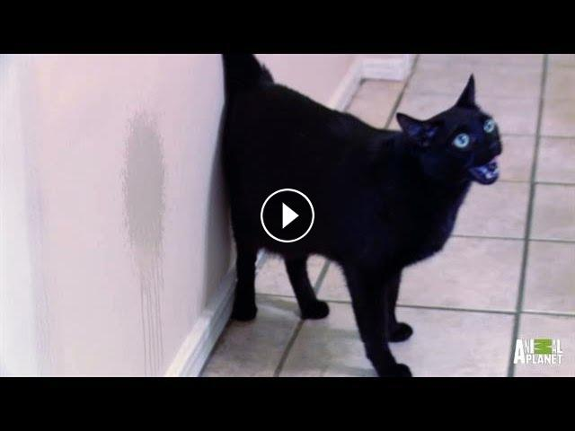 cat bites home care